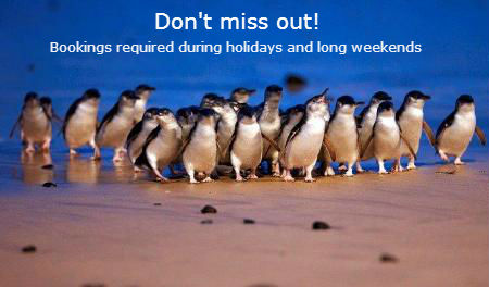 Dont miss out See the Penguins